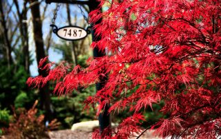 red tree by 7487 light post