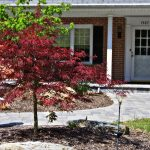 red maple tree by brick house