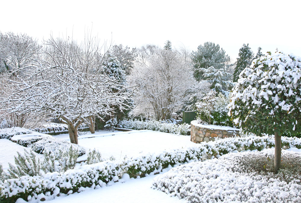 Winter Landscape Protection Tips 1
