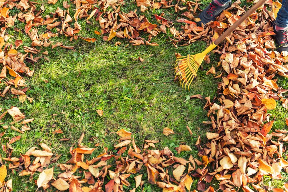 8 Tips For Your Autumn Yard and Lawn Care 1