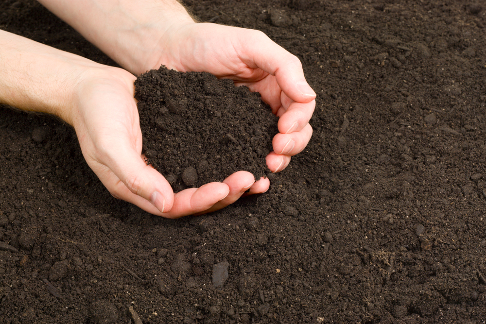 The Importance of Nutrient Rich Soil 1