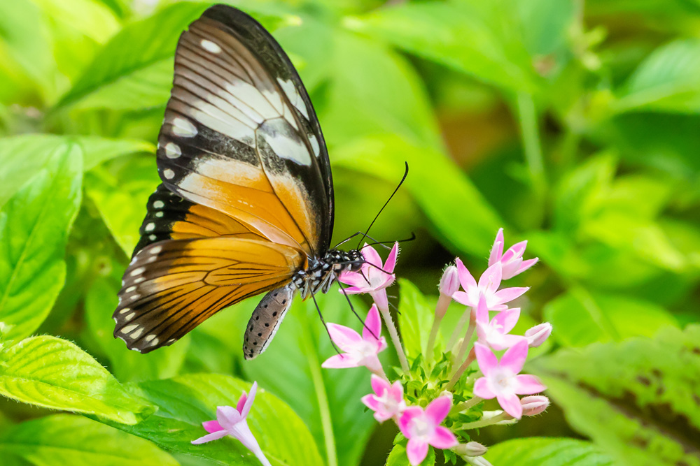 Colorful Gardens for Butterflies 1