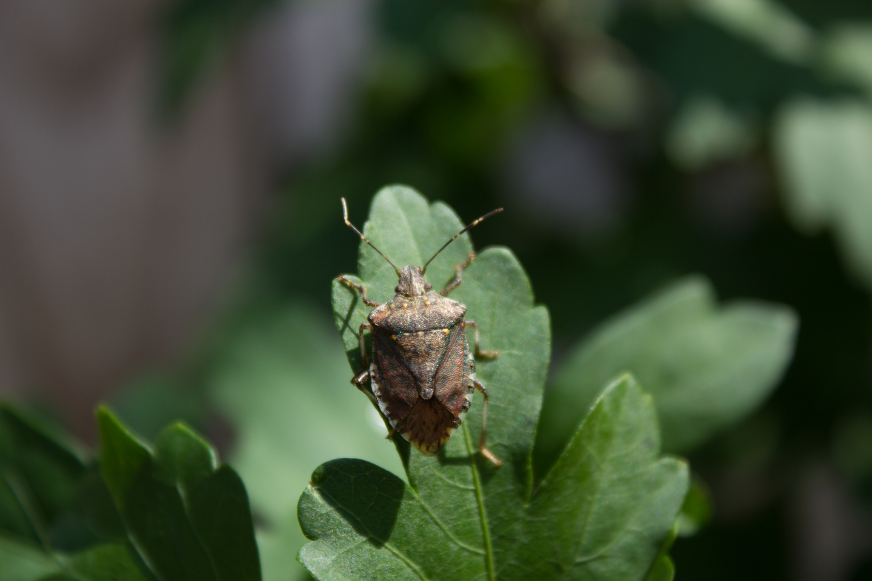 Common Pests To Look Out For 3